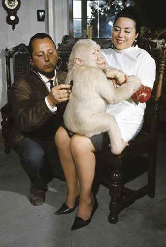 Floquet de Neu amb María Gracia i el Dr. Román Luera, veterinari del Zoo. Barcelona, 3 de març de 1967. Philippe, Le Tellier Getty Images