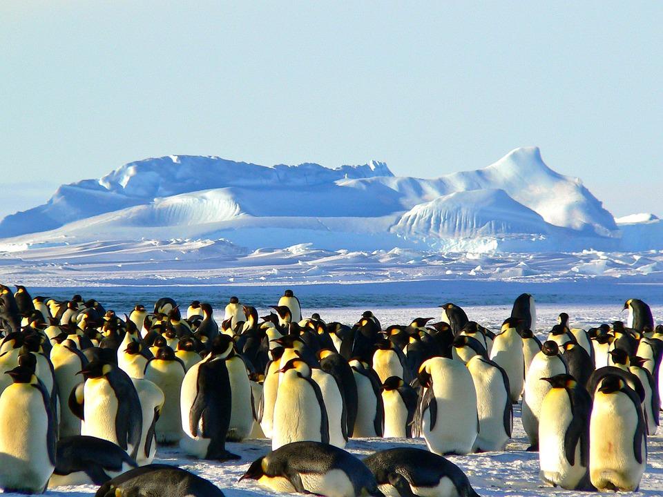 Pingüins a l'Antàrtida.