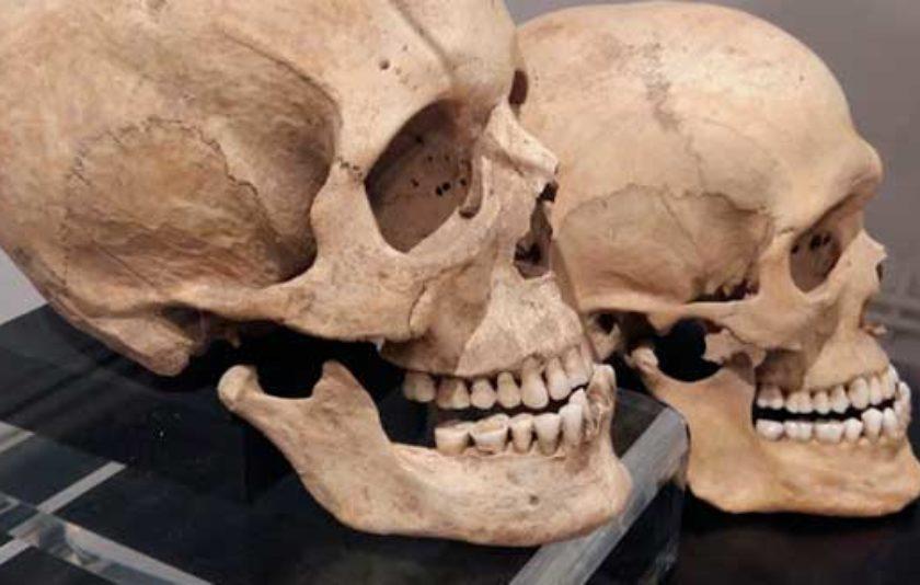Què expressen els ossos dels nostres avantpassats?